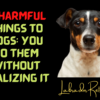 12 Harmful Things To Dogs