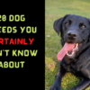 20 Dog Breeds You Certainly Don t Know About