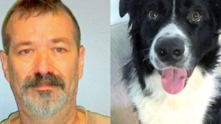 Dog Dies After Vicious Neighbor Stabs